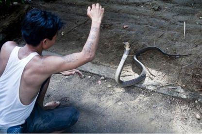 الأفاعي تحصد أرواح الآلاف في بورما سنويا