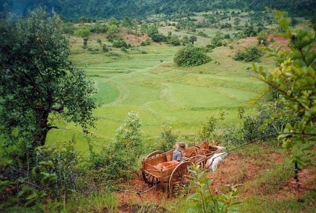 فرار 14 ألف شخص من النزاعات المسلحة فى ولاية شان بشمال ميانمار