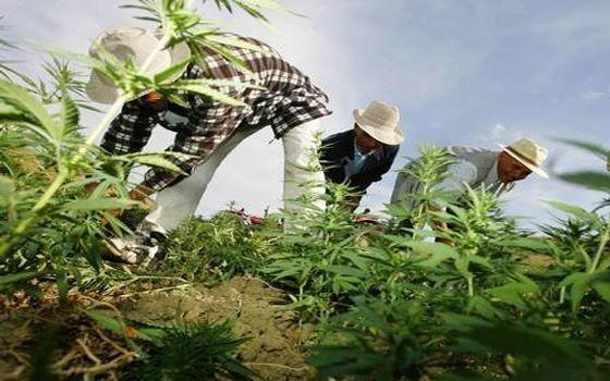 ميانمار تضبط كمية كبيرة من المخدرات في البحر